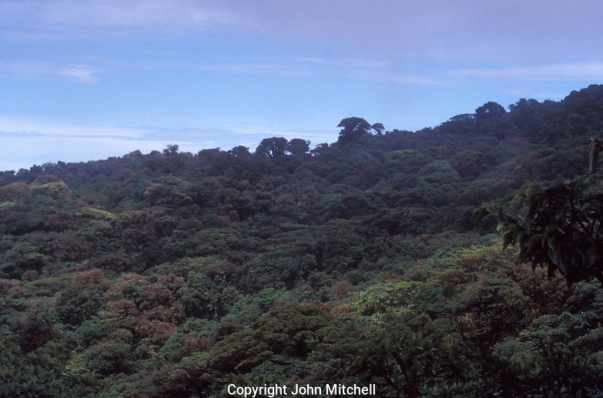 Forest canopy in in the Monteverde Cloud Forest Reserve, Costa Rica