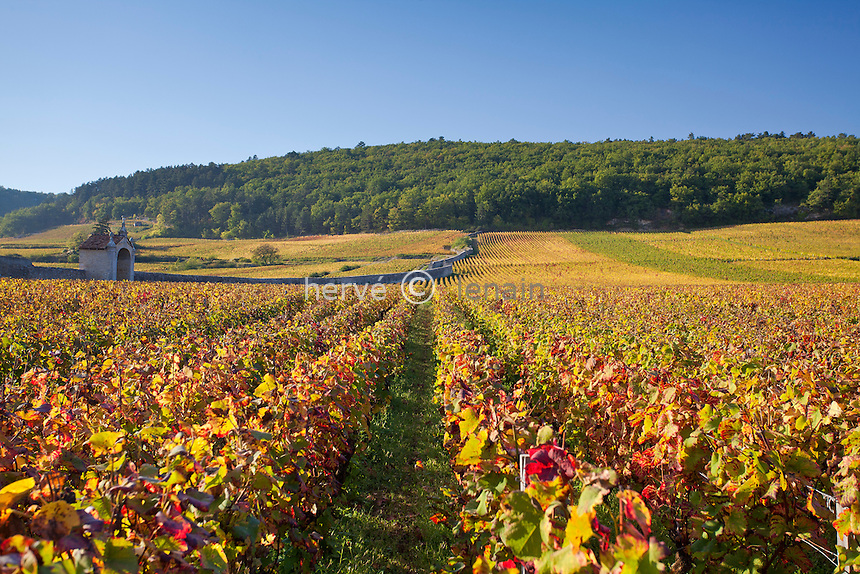 France, Côte d'Or (21), Route des Grands Crus, vignoble Côte de Nuits, Gevrey-Chambertin, vignoble en automne // France, Cote d'Or, Route des Grands Crus, Cote de Nuits vineyard, Gevrey Chambertin, vines in autumn