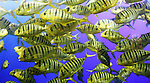 Close-up of a school of fish underwater