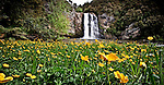 Flowers of yellow decorate the landscape below the much visited Hunua Falls..This New Zealand Fine Art Landscape Print, available in four sizes on either archival Hahnemuhle Fine Art Pearl paper or canvas, is printed using Epson K3 Ultrachrome inks and comes with a lifetime guarantee against fading..All prints are signed and numbered on the lower margin and come with my 100% money back guarantee on the purchase price, should you not be  completely happy with the quality of the delivered print or canvas.