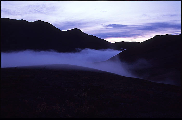 Fog fills a valley in Denali National Park.