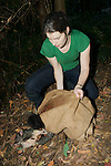 Sarah Hollinshead Releasing Mountain Brushtail Possum