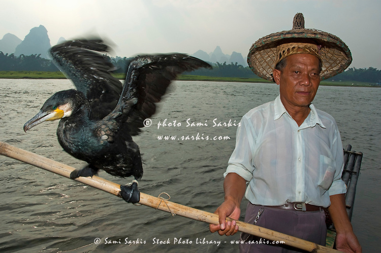 Portrait of a fisherman holding a pole with a cormorant balanced on the end, Li River, Yangshuo, Guangxi, China.