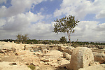 An Olive press at Hurvat Eked, a fortress from the Hellenistic period, the fortress was also used by the rebels during the Bar Kokhva revolt against the Romans