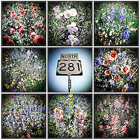 An iPhone montage of 9 individual photos depicting wildflowers along Highway 281, in Hill Country, Texas, April 25, 2010. Amongst others, Blue Bonnets, Indian Paint Brush, Indian Blanket, Winecup, Black Eyed Susan and Daisies are common along the highway...PHOTOS/ MATT NAGER