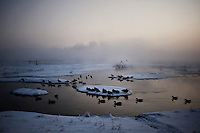 Duck decoys line a lake filled with morning mist and snow during a hunting trip near Grand Island, Nebraska, Sunday, December 4, 2011. Hunting duck and White Tail deer is common in the area...Photo by Matt Nager