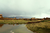 Lake Titicaca, Bolivia. Small adobe settlement on Lake Titicaca with sheep.