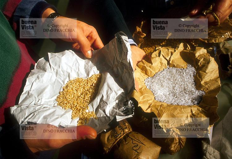 - specimens of rice at cereals stock exchange of Novara....- campioni di riso presso la borsa dei cereali di Novara