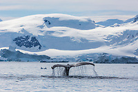 Paradise Bay, Antarctic peninsula