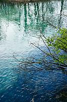 Details, Plitvice Lakes NP, Croatia