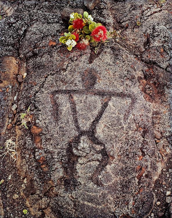 Lehua bloom and petroglyph, Hawaii Volcanoes National Park