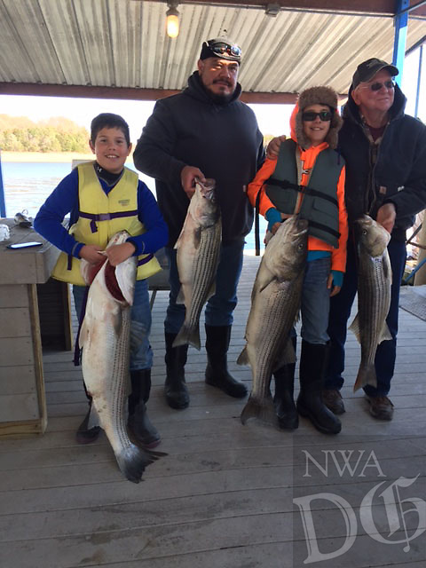 Courtesy photo<br /> Late fall and winter are prime seasons for striped bass fishing at Beaver Lake. Kansas anglers Samuel Lynn (from left) Tony Lynn, Vincent Lynn and Gary Penington pose at Hickory Creek Marina with the results of a November trip at Beaver. They fished with striper guide Scott Wedel.