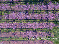 63801-11818 Peach orchard in spring-aerial  Marion Co. IL
