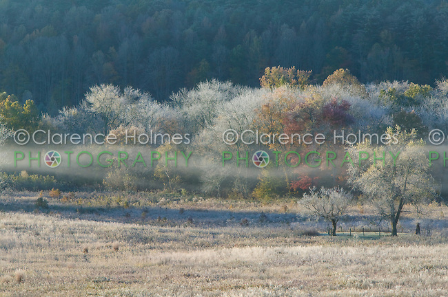 Early morning fog, and frost on the ground and trees in Cades Cove, Great Smoky Mountains National Park