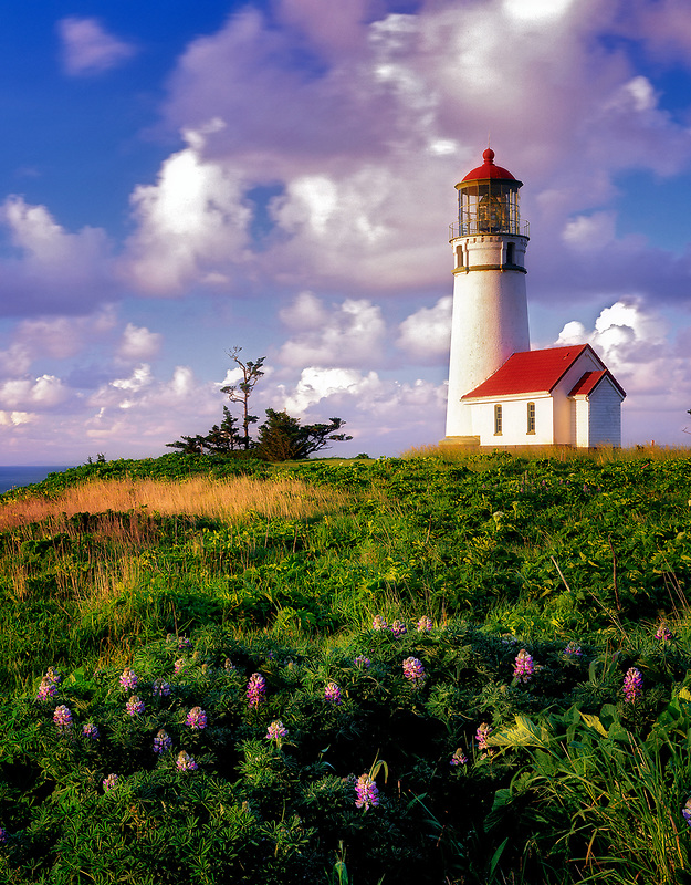 Cape Blanco lighthouse and wildflowers (lupine) with clouds. Oregon