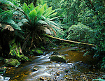 Nelson Creek, Franklin Gordon Wild Rivers NP, Tasmania, Australia