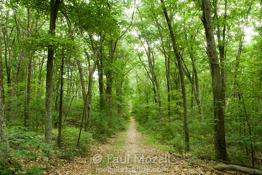 Old carriage road goes through the woods of eastern Massachusetts