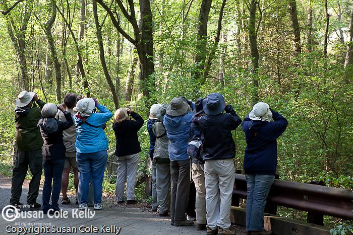 Birdwatching in Belleplain State Forest, Dennis, NJ