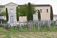 chateau cadet bon vineyard saint emilion bordeaux france