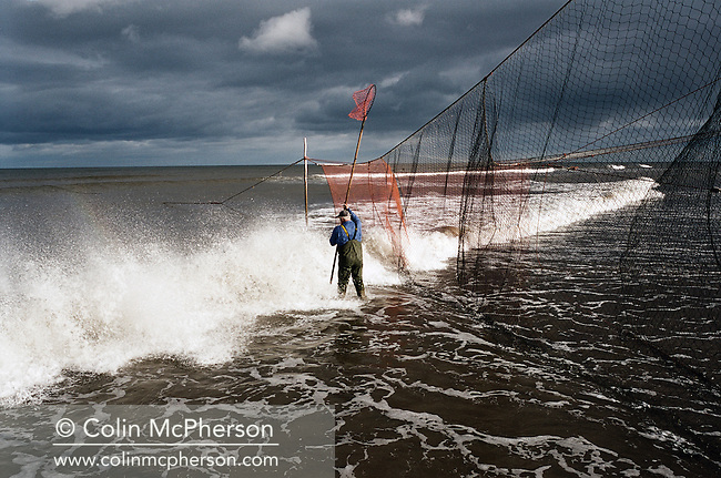 Bob Ritchie fishes one of his 'jumper' nets for wild Atlantic salmon at Kinnaber, Angus. The once-thriving Scottish salmon netting industry fell into decline in the 1970s and 1980s when the numbers of fish caught reduced due to environmental and economic reasons. By 2007, only a handful of men still caught wild salmon and sea trout using traditional methods, mainly for export to the Continent.