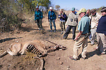 Earthwatchers with Dead Eland