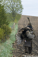 Hunter carrying wild turkey over his shoulder