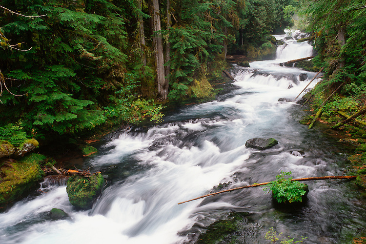 Rain forest lines the banks of the wild Santiam River in  the Oregon Cascades.