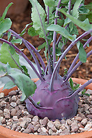 Purple Vegetables Stock Images Photos