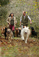 FAO JANET TOMLINSON, DAILY MAIL PICTURE DESK<br /> Pictured: Owners Gillian and Mark Thompson walking some of the dogs they accommodate Monday 14 November 2016<br /> Re: The Dog House in the village of Talog, Carmarthenshire, Wales, UK