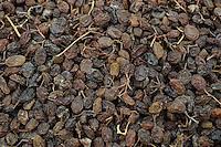 TURKEY Manisa, cultivation of grapes for production of raisin and sultana, sun dried grapes at farm / TUERKEI, Anbau von Weintrauben fuer Verarbeitung zu Trockenobst Rosinen und Sultaninen, Sonnen getrocknete Sultaninen
