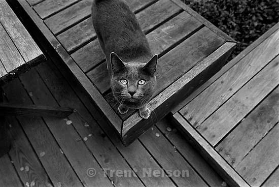 Black cat<br />
