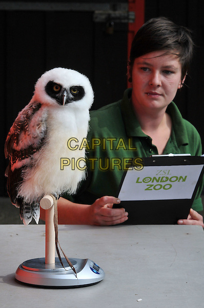 Lucy Smith from London Zoo weighs Elton, a 9 month old Spectacled Owl.  She weighed 635 grams.London Zoo annual weigh-in.  Zookeepers prepare to record the weight and height of the 16,000 animals currently living at London Zoo.  London Zoo, Regents Park, London, England..August 22nd, 2012.animal bird clipboard white half length.CAP/BF.©Bob Fidgeon/Capital Pictures.