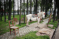 CHINA. Hubei Province. Wuhan. A horse in an enclosure in Wuhan zoo. In many of China's 'second-tier' cities, away from the modern zoos in the megacities of Beijing and Shanghai, hide a plethora of smaller unknown zoos. In these zoos, what can only be described as animal abuse is subtly taking place in the form of deprivation of light, space, sanitation and social contact with other animals. Living in awful conditions, these animals spend there days entertaining tourists who seem oblivious to the animals' plight and squalid existence. 2008.