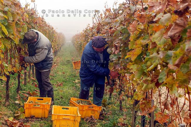 Hetszolo-un momento della vendemmia 2005<br /> &copy; Paolo della Corte