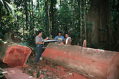 Osa Peninsula, Costa Rica. Men in the forest using manual systems to extract fallen timber sustainably from the forest.