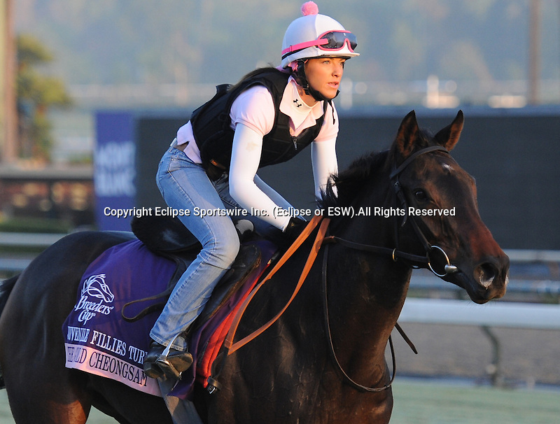 The Gold Cheongsam, trained by Jeremy Noseda, exercises in preparation for the upcoming Breeders Cup at Santa Anita Park on October 31, 2012.