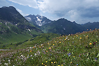 Austria, Vorarlberg, near Schroecken: Alpine meadow south-east of Hochtannberg passroad with Mohnenfluh and Braunarlspitze mountains