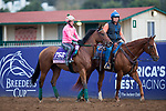 DEL MAR, CA - NOVEMBER 02: Caledonia Road, owned by Zoom and Fish Stable Inc.,Charlie Spiring & Newton Anner Stud and trained by Ralph E. Nicks, exercises in preparation for the 14 Hands Winery Breeders' Cup Juvenile Fillies at Del Mar Thoroughbred Club on November 2, 2017 in Del Mar, California. (Photo by Kazushi Ishida/Eclipse Sportswire/Breeders Cup)