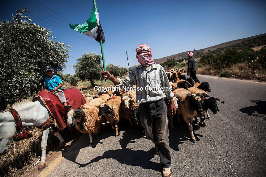 A shepherd leads his flock along a road in northern Syria as he waves an FSA flag. The northern provinces of the country have been liberated by rebel fighters and the civil society is leading itself to reorganize its institutions at this new stage.