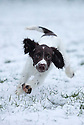 2015_01_21_chester_ashbourne_snow