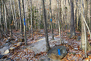 Blue trail blazing painted on trees along Maggie's Run Trail in Crawford Notch State Park of New Hampshire.