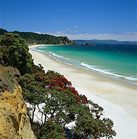New Zealand, North Island, Coromandel Peninsula: Otama Beach with Pohutukawa Tree in foreground | Neuseeland, Nordinsel, Coromandel Halbinsel: Otama Beach und Pohutukawa Baum im Vordergrund
