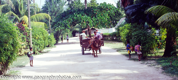 Transport by ox cart down the main street on La Digue, Seychelles