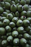 Barra do Bugre_MT, Brasil...Frutos da Palmeira do Acuri na APA (Area de Protecao Ambiental da Serra das Araras)..Foto: JOAO MARCOS ROSA / NITRO