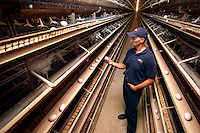 Andrew Kaldenberg, complex manager at Rose Acre Farms near Stuart, inspects a freshly-laid egg in the farm's chicken house on Friday.  The barn houses about 230,000 chickens and the farm produces about 918,000 eggs per day.
