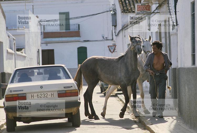 - Andalusia, horses in a village near Cadiz....- Andalusia, cavalli in un villaggio nei pressi di  Cadice..