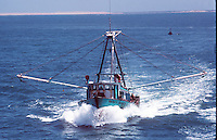 Mexican Shrimper on the Sea of Cortez