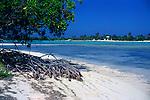 Mangrove plant growing in sandy beach by blue sea of tropical lagoon, Owen Island, Little Cayman, Cayman Islands,