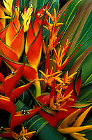 Assorted heliconia blossoms arranged with ti leaves