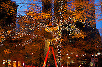 UNITED STATES, NEW YORK,  November 19, 2011..A Private Worker sets Christmas lights in a tree at Zuccotti Parkin New York November 19, 2011. VIEWpress / Kena Betancur..A well-known Washington lobbying firm with links to the financial industry has proposed an $850,000 plan to take on Occupy Wall Street and politicians who might express sympathy for the protests, according to a memo obtained by the MSNBC program.Local media report..